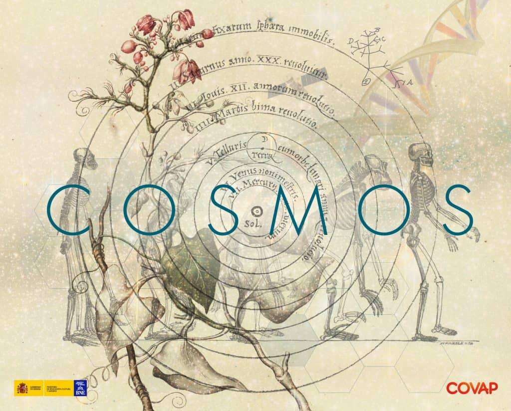 Cosmos-BNE
