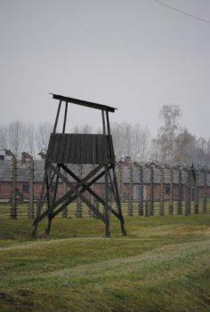 Holocausto- Literatura alemana