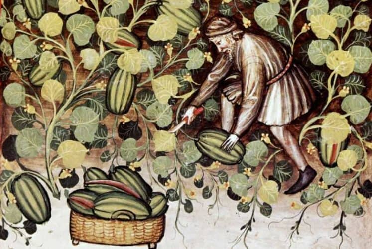 Alimentacion vegetal-Investigación arqueológica